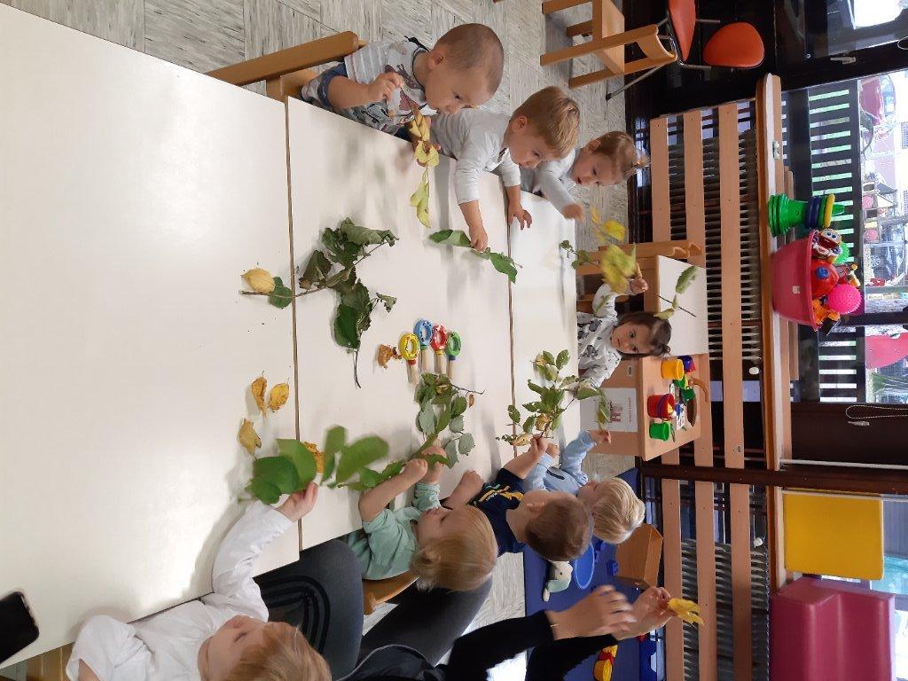 opazovanje-jesenkih-listov-4